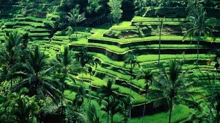 Video Travel Guide: 10 Top Tourist Attractions In Indonesia