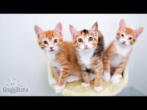 LIVE:  Feral rescue cat Naya and her newborn kittens!