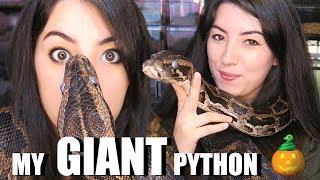 HUGE SNAKE | Burmese Python | My Biggest Pet Snake | Creature Feature