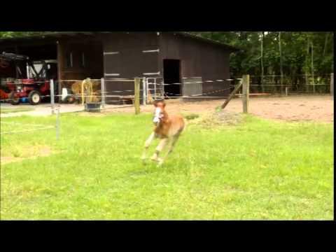 Ngựa non háu chạy :))