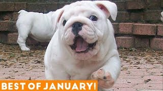 Video Funniest Pet Reactions & Bloopers of January 2018 | Funny Pet Videos MP3, 3GP, MP4, WEBM, AVI, FLV Juni 2018