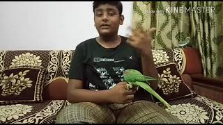 How to Stop Your Parrot from Flying ? || Bird Mania