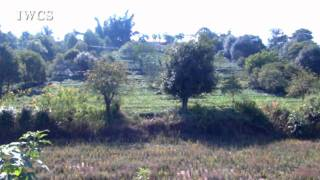Local Agroforestry