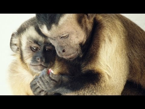 Frans de Waal%3A Moral behavior in animals