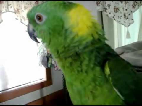 This Parrot has soul!