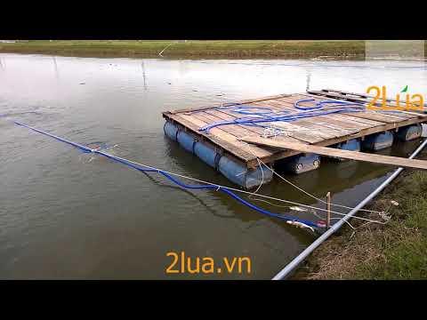 Máy thổi khí nuôi cá | Lắp đặt máy thổi khí ao cá