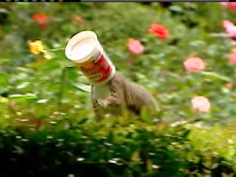 Squirrel with Yogurt Cup Stuck on it's Head.