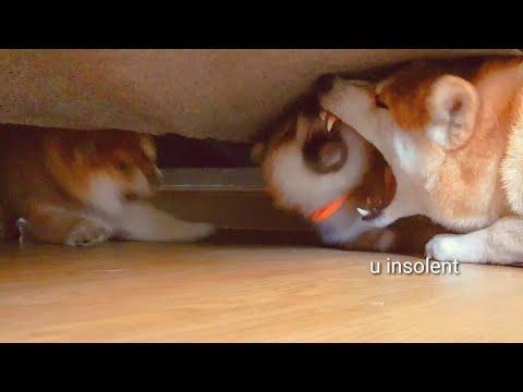 Potats disrespecc Mom