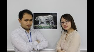 White tigers are in danger of becoming extinct.