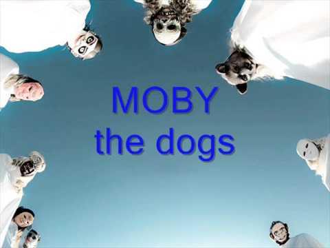 Tekst piosenki Moby - The Dogs po polsku