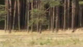 Video ZÁBERY Z POĽOVAČIEK MP3, 3GP, MP4, WEBM, AVI, FLV Oktober 2017