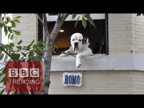 washington - Romo, the