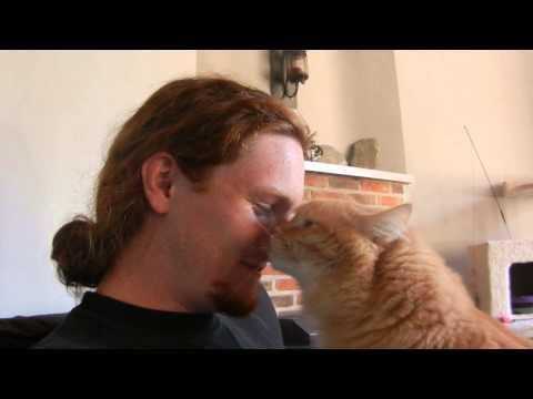 un gatto che ama le coccole