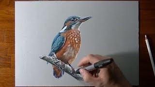 Disegno realistico in timelapse: un uccello (Martin Pescatore)