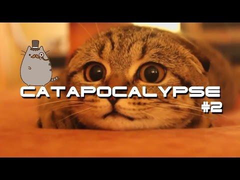 Catapocalypse #2 - Котопокалипсис #2! Подборка котиков!