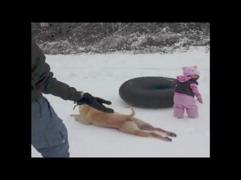 Watch as this dog slides across the ice