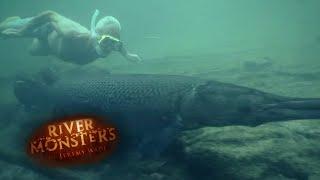 特定外来生物指定を受けた巨大魚、アリゲーターガーの野生の姿を見てみよう