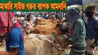 Video Cow market update | কমদামে গরু কিনতে চাইলে ভিডিওটি দেখুন | Interview with seller Interview MP3, 3GP, MP4, WEBM, AVI, FLV Agustus 2018