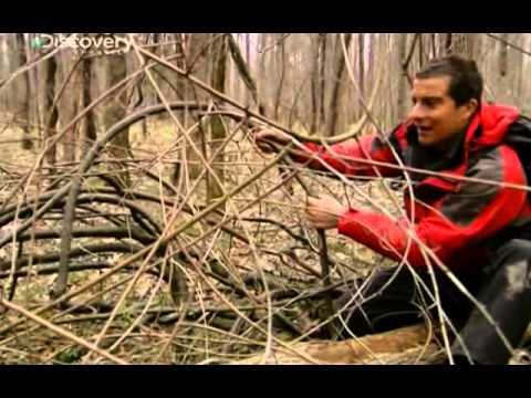 Bear Grylls - Alabama