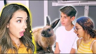 House Rabbit Makeover | Episode 2 by Lennon The Bunny
