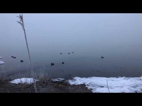 Hunting in the Fog | Utah Lake Duck Hunt