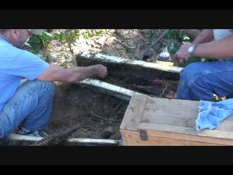 Moving wild bee hive – bare hands