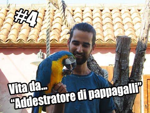 Ep #4  Vita da Addestratore di pappagalli || Parrot's Channel