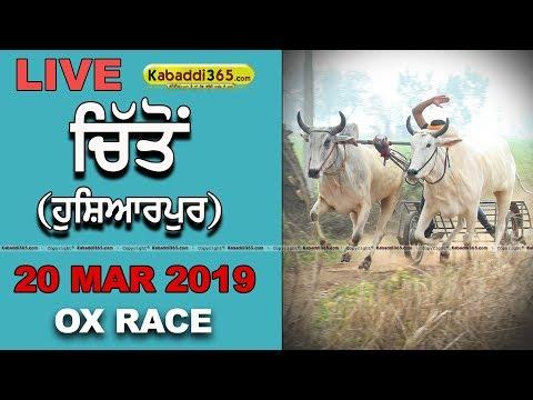 Chitton (Hoshiarpur) Ox Race 20 Mar 2019
