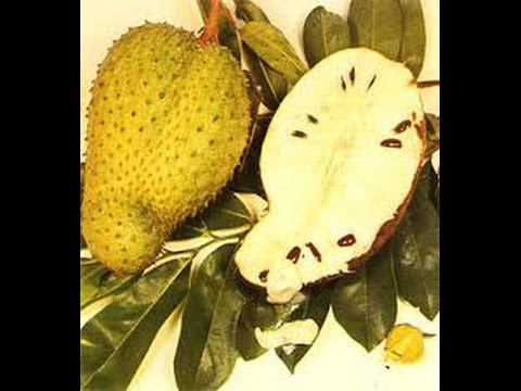 HOW TO OPEN AND EAT SOURSOP TOPICAL FRUIT.