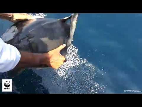 Duik in de zee om schildpad te redden