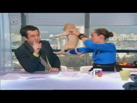 A dog poos on a table live in TV!