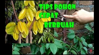 Video #TIS#CARA IKAT Pohon, Percepat Buah Bermunculan [Fruit Booster Tips and Tricks] English SUB MP3, 3GP, MP4, WEBM, AVI, FLV Februari 2018