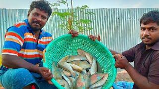 கருவாடு செய்வது எப்படி  / how to prepare dry fish