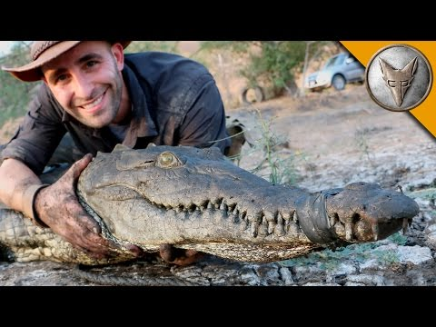 These 3 Animal Experts Face Off With A Crocodile