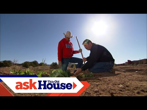 How to Grow Vegetables in the Desert