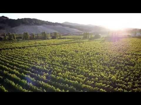 Dierberg Vineyard Introduction