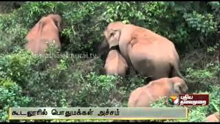 Elephants Enter Village Creating Panic At Cuddalore