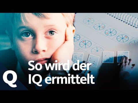Der IQ-Test und seine Aussagekraft