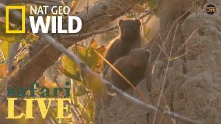 Safari Live - Day 176 | Nat Geo WILD by Nat Geo WILD