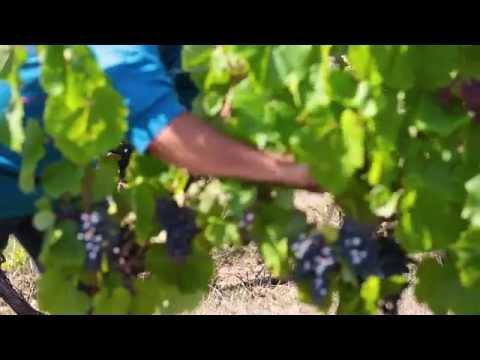 Rencontre avec les vignerons du Lot