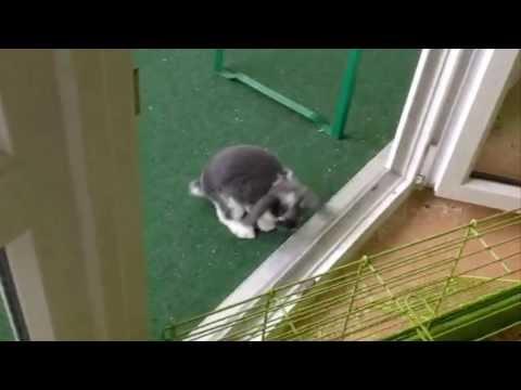 Süße Lustige Hasen mit Zuckungen / Kopfnuss | Witzige Sammlung Full HD 1080p
