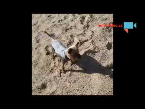 Řádění na pískovně
