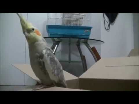 UNBOXING MY COCKATIEL