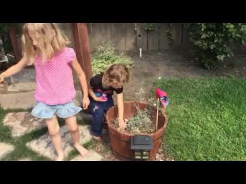 Chloe Toy Hunt (видео)