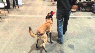 DOG TRAINING AT THE DEL MAR HOME SHOW