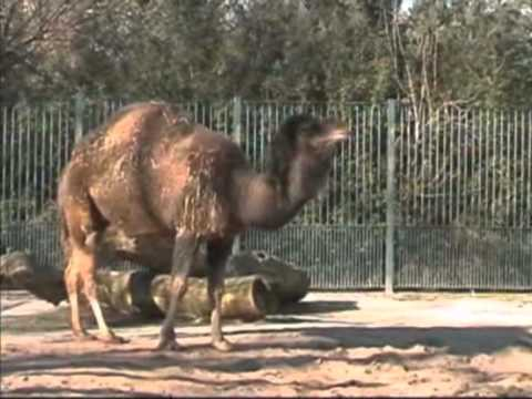 Magdeburger Zoogeschichten