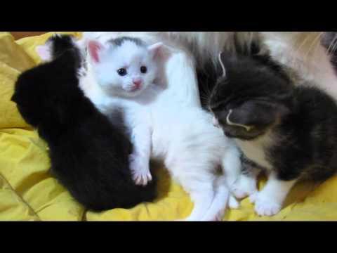 Kittensyoutube on Deze Kittens Zijn Nog Heel Erg Jong Maar Zo Schattig