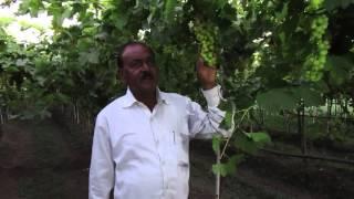 Vinchur Kashinath Jaughale Bullet