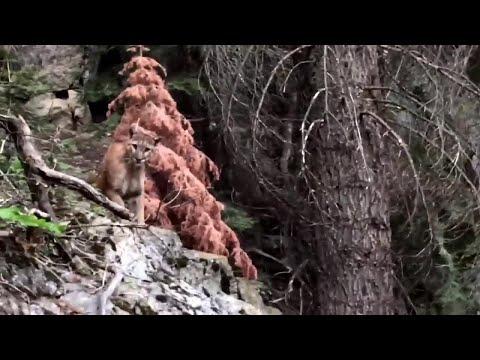 Kuumottava kohtaaminen puuman kanssa – Retkeilijällä lähti kalsarit vaihtoon