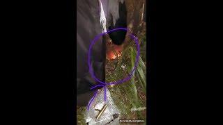 """Video MELEDAK """"Pengambilan Pusaka Merah Delima (Real) Ngawen/Japah Kab.Blora MP3, 3GP, MP4, WEBM, AVI, FLV Mei 2018"""